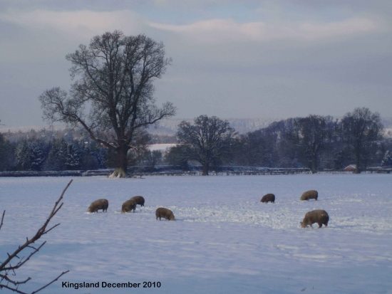 Snow Covered Local Village Field © Mr & Mrs L. Mitchell