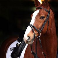 Horse-boutique