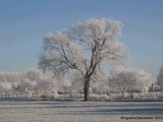 Winter Wonderland © Mr & Mrs L. Mitchell