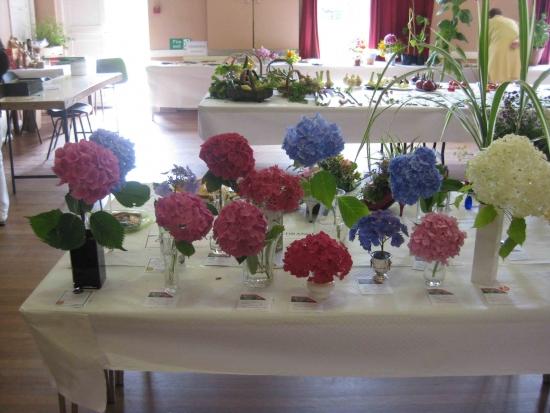 Kingsland Flower Show: Believe it or not - Flowers at the Kingsland Flower Show