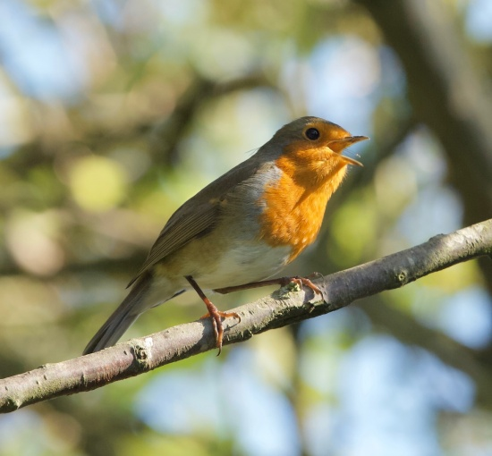 Robin March 2021  © Philip Batty